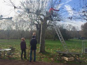 la-matasse-taille-branches
